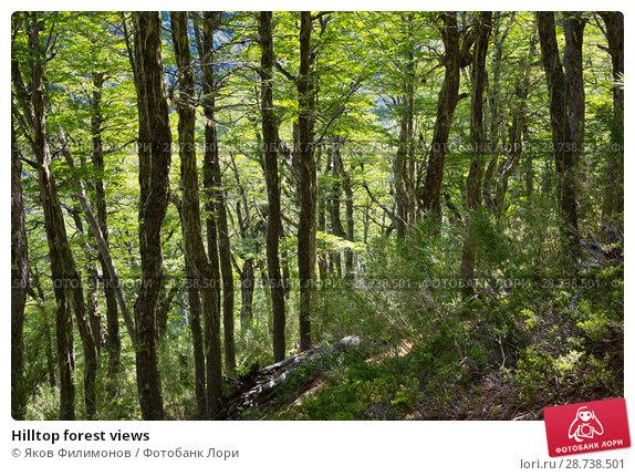 Купить «Hilltop forest views», фото № 28738501, снято 5 февраля 2017 г. (c) Яков Филимонов / Фотобанк Лори