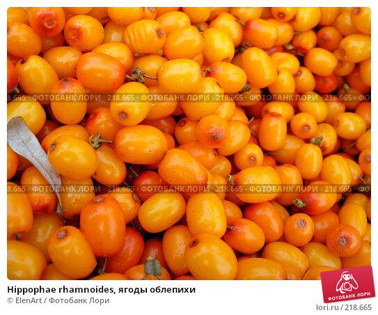 Hippophae rhamnoides, ягоды облепихи, фото № 218665, снято 16 января 2017 г. (c) ElenArt / Фотобанк Лори