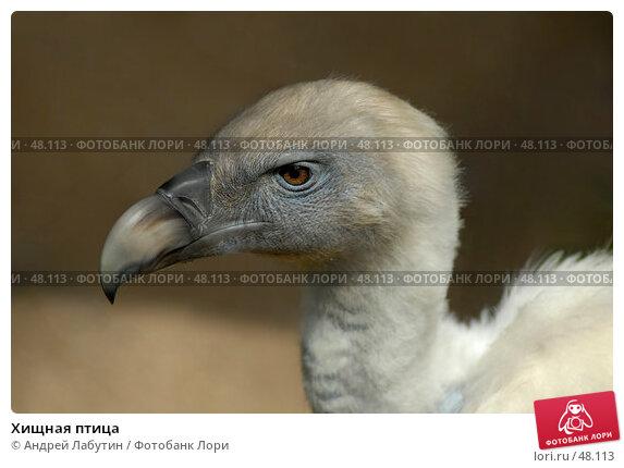 Купить «Хищная птица», фото № 48113, снято 20 мая 2007 г. (c) Андрей Лабутин / Фотобанк Лори