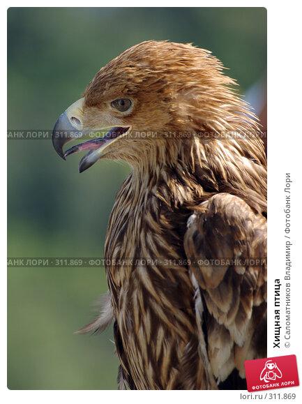 Хищная птица, фото № 311869, снято 19 июля 2007 г. (c) Саломатников Владимир / Фотобанк Лори