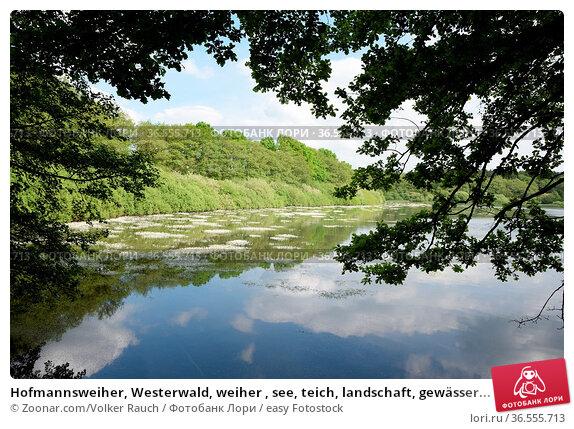 Hofmannsweiher, Westerwald, weiher , see, teich, landschaft, gewässer... Стоковое фото, фотограф Zoonar.com/Volker Rauch / easy Fotostock / Фотобанк Лори