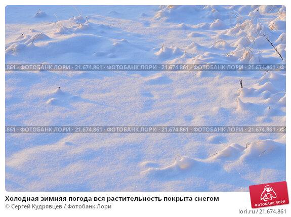 Холодная зимняя погода вся растительность покрыта снегом. Стоковое фото, фотограф Сергей Кудрявцев / Фотобанк Лори
