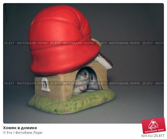 Хомяк в домике, фото № 25817, снято 18 марта 2007 г. (c) Fro / Фотобанк Лори