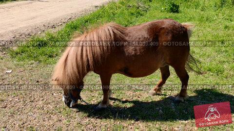 Horse is grazed outdoor. rural scene. Стоковое видео, видеограф Ильин Сергей / Фотобанк Лори