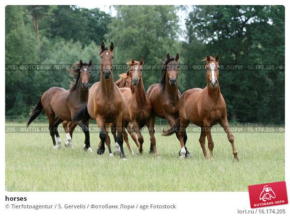 Купить «horses», фото № 16174205, снято 19 июня 2008 г. (c) age Fotostock / Фотобанк Лори