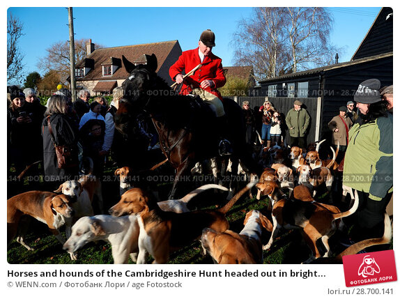 Купить «Horses and hounds of the Cambridgeshire Hunt headed out in bright sunshine for their traditional Boxing Day pursuit at Eltisley. The hunt – full title...», фото № 28700141, снято 26 декабря 2016 г. (c) age Fotostock / Фотобанк Лори