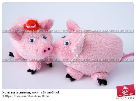 Хоть ты и свинья, но я тебя люблю!, фото № 18953, снято 22 февраля 2007 г. (c) Юрий Синицын / Фотобанк Лори