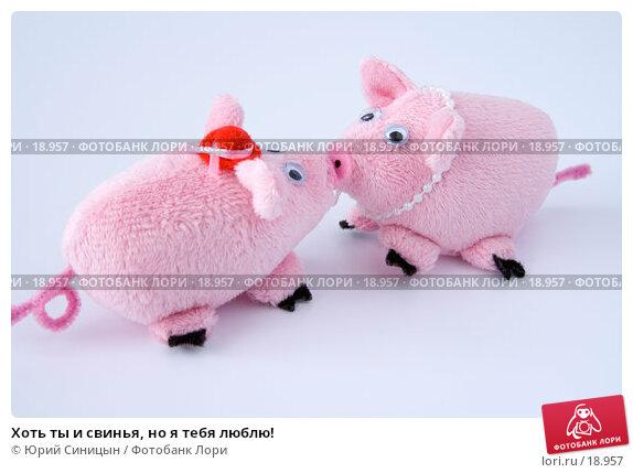Хоть ты и свинья, но я тебя люблю!, фото № 18957, снято 22 февраля 2007 г. (c) Юрий Синицын / Фотобанк Лори
