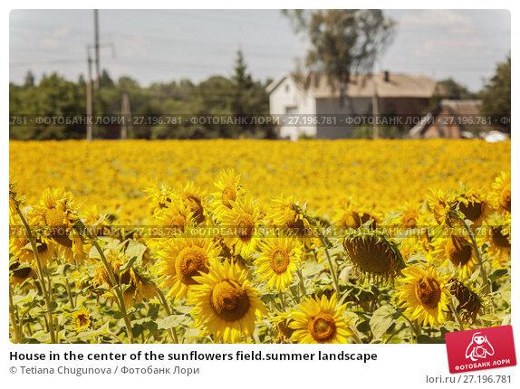 Купить «House in the center of the sunflowers field.summer landscape», фото № 27196781, снято 30 июля 2017 г. (c) Tetiana Chugunova / Фотобанк Лори