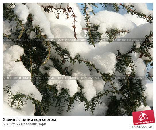 Хвойные ветки под снегом, фото № 226509, снято 8 февраля 2007 г. (c) VPutnik / Фотобанк Лори