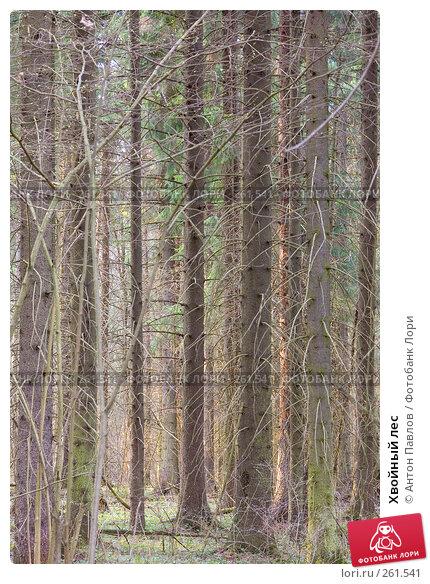 Хвойный лес, фото № 261541, снято 10 апреля 2008 г. (c) Антон Павлов / Фотобанк Лори