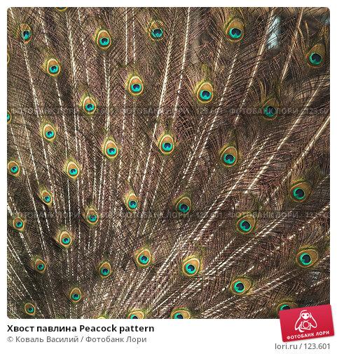 Хвост павлина Peacock pattern, фото № 123601, снято 20 апреля 2007 г. (c) Коваль Василий / Фотобанк Лори