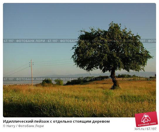 Идиллический пейзаж с отдельно стоящим деревом, фото № 67197, снято 30 июня 2004 г. (c) Harry / Фотобанк Лори