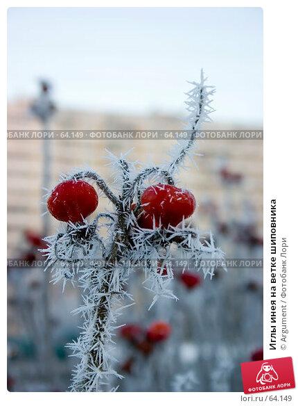 Иглы инея на ветке шиповника, фото № 64149, снято 28 декабря 2004 г. (c) Argument / Фотобанк Лори