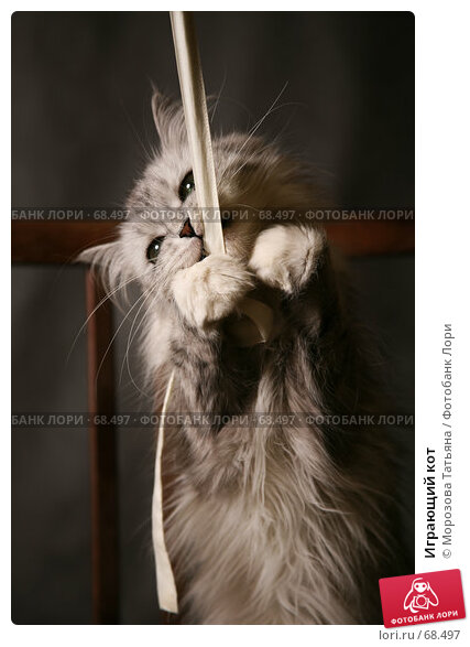 Играющий кот, фото № 68497, снято 21 июля 2007 г. (c) Морозова Татьяна / Фотобанк Лори