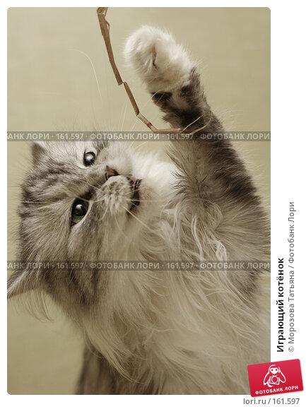 Играющий котёнок, фото № 161597, снято 6 марта 2007 г. (c) Морозова Татьяна / Фотобанк Лори