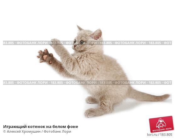 Играющий котенок на белом фоне, фото № 183805, снято 27 октября 2007 г. (c) Алексей Хромушин / Фотобанк Лори