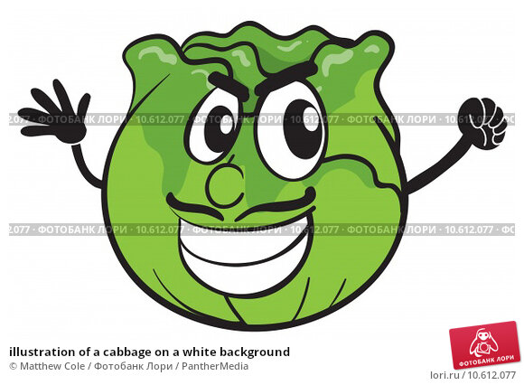 illustration of a cabbage on a white background. Стоковая иллюстрация, иллюстратор Matthew Cole / PantherMedia / Фотобанк Лори