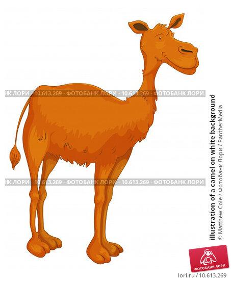 illustration of a camel on white background. Стоковая иллюстрация, иллюстратор Matthew Cole / PantherMedia / Фотобанк Лори