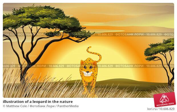 illustration of a leopard in the nature. Стоковая иллюстрация, иллюстратор Matthew Cole / PantherMedia / Фотобанк Лори