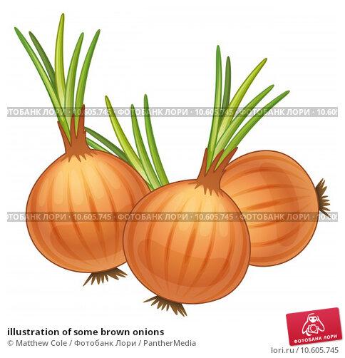 illustration of some brown onions. Стоковая иллюстрация, иллюстратор Matthew Cole / PantherMedia / Фотобанк Лори