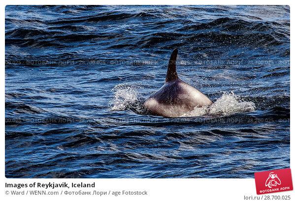 Купить «Images of Reykjavik, Iceland Featuring: Faxi Bay, Iceland Where: Reykyavik, Iceland When: 24 Oct 2016 Credit: Ward/WENN.com», фото № 28700025, снято 24 октября 2016 г. (c) age Fotostock / Фотобанк Лори