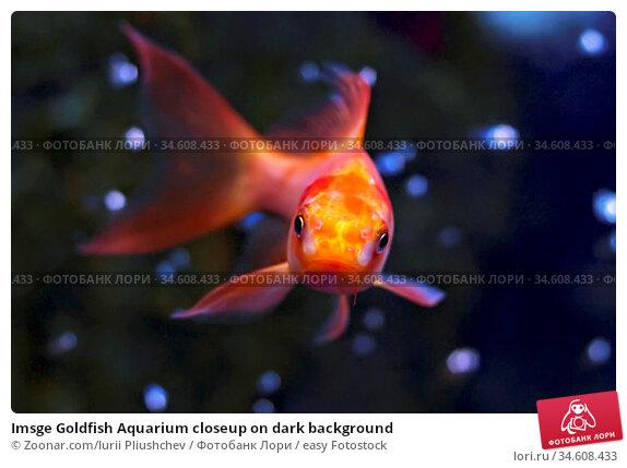 Imsge Goldfish Aquarium closeup on dark background. Стоковое фото, фотограф Zoonar.com/Iurii Pliushchev / easy Fotostock / Фотобанк Лори