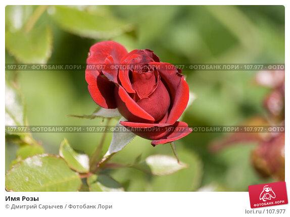 Купить «Имя Розы», фото № 107977, снято 14 июля 2007 г. (c) Дмитрий Сарычев / Фотобанк Лори