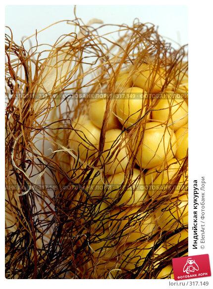 Индийская кукуруза, фото № 317149, снято 27 октября 2016 г. (c) ElenArt / Фотобанк Лори