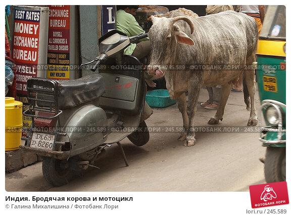 Индия. Бродячая корова и мотоцикл, фото № 245589, снято 29 апреля 2005 г. (c) Галина Михалишина / Фотобанк Лори
