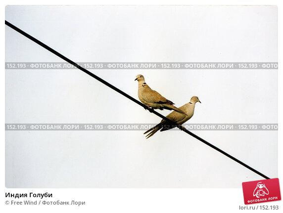 Индия Голуби, эксклюзивное фото № 152193, снято 25 октября 2016 г. (c) Free Wind / Фотобанк Лори
