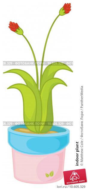 indoor plant. Стоковая иллюстрация, иллюстратор Matthew Cole / PantherMedia / Фотобанк Лори