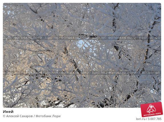 Иней. Стоковое фото, фотограф Алексей Сахаров / Фотобанк Лори