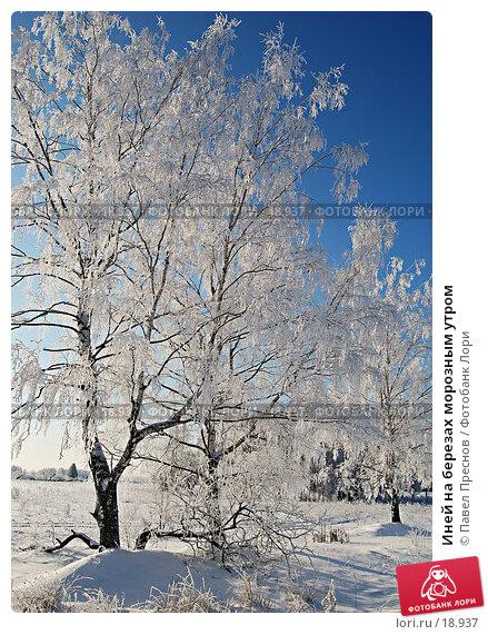 Иней на березах морозным утром, фото № 18937, снято 2 февраля 2007 г. (c) Павел Преснов / Фотобанк Лори