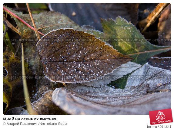 Иней на осенних листьях, фото № 291641, снято 27 марта 2017 г. (c) Андрей Пашкевич / Фотобанк Лори