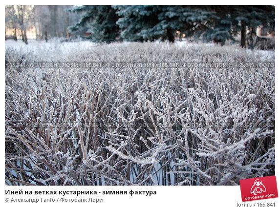 Купить «Иней на ветках кустарника - зимняя фактура», фото № 165841, снято 25 ноября 2017 г. (c) Александр Fanfo / Фотобанк Лори