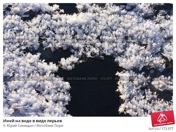 Иней на воде в виде перьев, фото № 173977, снято 8 января 2008 г. (c) Юрий Синицын / Фотобанк Лори
