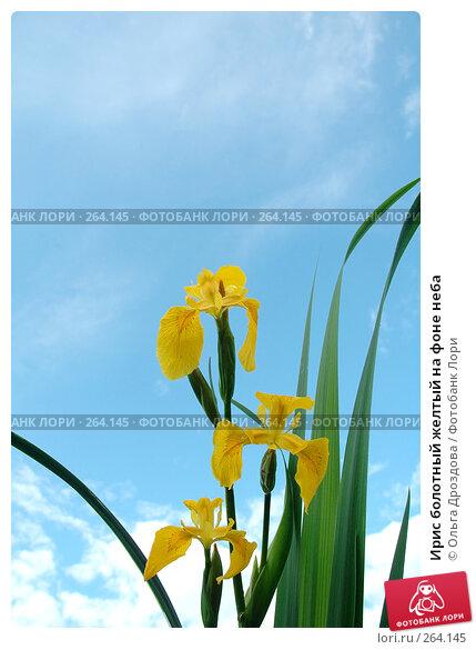 Ирис болотный желтый на фоне неба, фото № 264145, снято 9 июня 2005 г. (c) Ольга Дроздова / Фотобанк Лори