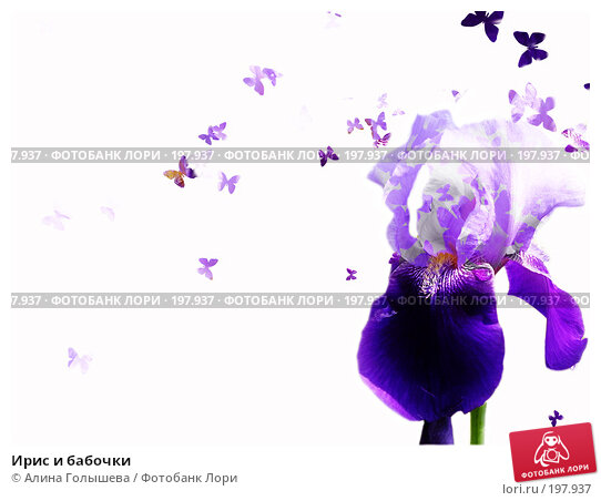 Ирис и бабочки, эксклюзивное фото № 197937, снято 17 июня 2006 г. (c) Алина Голышева / Фотобанк Лори