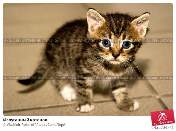 Испуганный котенок, фото № 24449, снято 7 сентября 2006 г. (c) Vladimir Fedoroff / Фотобанк Лори