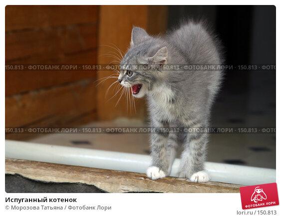 Купить «Испуганный котенок», фото № 150813, снято 1 сентября 2004 г. (c) Морозова Татьяна / Фотобанк Лори