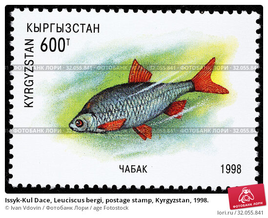 Issyk-Kul Dace, Leuciscus bergi, postage stamp, Kyrgyzstan, 1998. (2013 год). Редакционное фото, фотограф Ivan Vdovin / age Fotostock / Фотобанк Лори