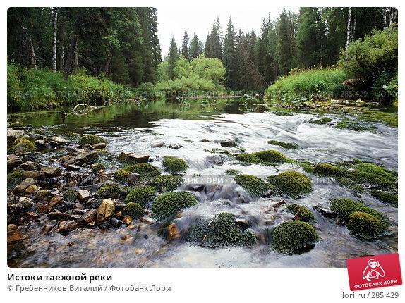 Истоки таежной реки, фото № 285429, снято 29 мая 2017 г. (c) Гребенников Виталий / Фотобанк Лори