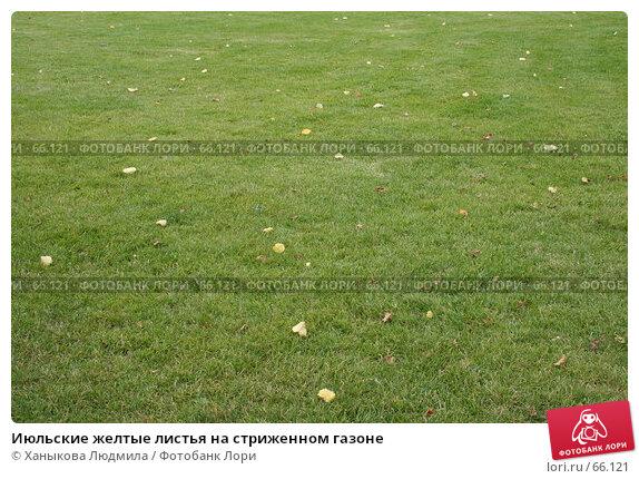 Июльские желтые листья на стриженном газоне, фото № 66121, снято 25 июля 2007 г. (c) Ханыкова Людмила / Фотобанк Лори