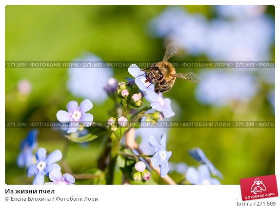 Купить «Из жизни пчел», фото № 271509, снято 4 мая 2008 г. (c) Елена Блохина / Фотобанк Лори
