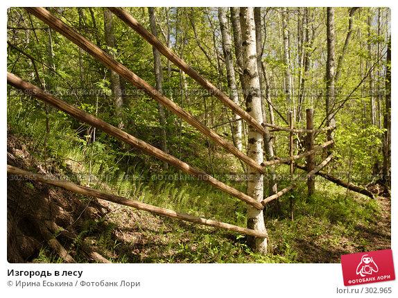 Изгородь в лесу, фото № 302965, снято 25 мая 2008 г. (c) Ирина Еськина / Фотобанк Лори