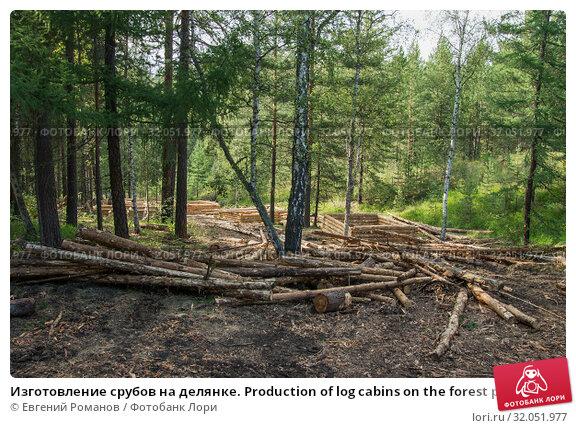 Изготовление срубов на делянке. Production of log cabins on the forest plot. Стоковое фото, фотограф Евгений Романов / Фотобанк Лори