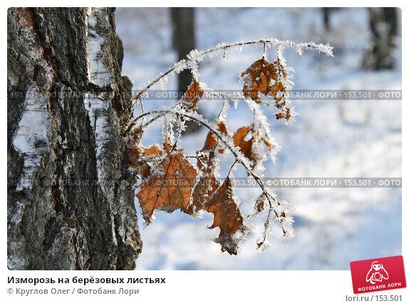 Изморозь на берёзовых листьях, фото № 153501, снято 5 декабря 2007 г. (c) Круглов Олег / Фотобанк Лори