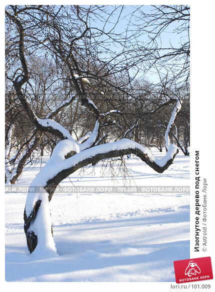 Изогнутое дерево под снегом, фото № 101009, снято 11 февраля 2007 г. (c) Astroid / Фотобанк Лори