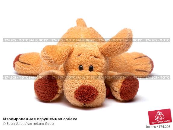 Купить «Изолированная игрушечная собака», фото № 174205, снято 13 января 2008 г. (c) Ерин Илья / Фотобанк Лори